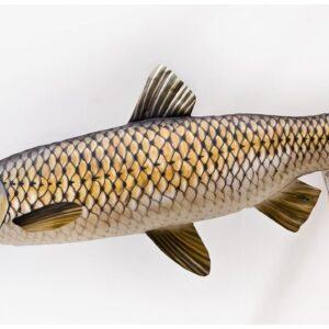 Gaby Polštář plyšová ryba Amur 105cm